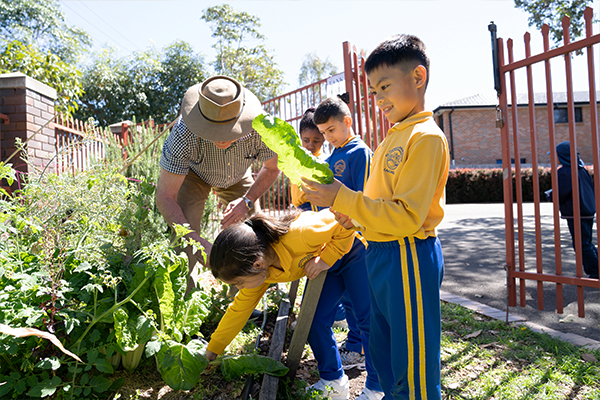 St Therese Catholic Primary School Lakemba - students attending to school garden